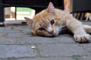roze-sleutel-interview-mandy-kattenvoorlichting (5)