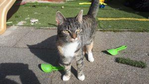 roze-sleutel-interview-mandy-kattenvoorlichting (6)