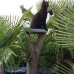 voorpaginafoto-ciao-civo-pito-chantal-kattenvoorlichting