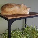 bemiddeling-herplaatsing-rouge-maine-coon-kattenherplaatsing (8)