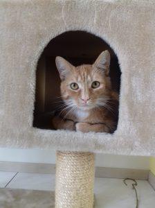 tom-herplaatsing-jonge-kater-kattenherplaatsing