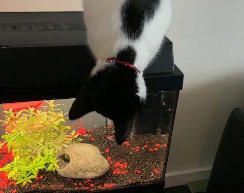 vlekkie-herplaatsing-jonge-poes-kattenherplaatsing (4)
