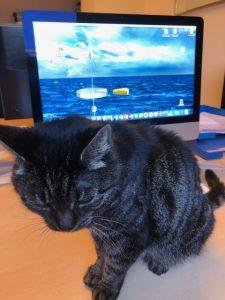 chica-nieuwe-thuis-succesvolle-kattenherplaatsing (1)