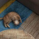 opvangertje-jonge-tom-nieuwe-huis-kattenherplaatsing (1)