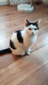 snoes-kattenherplaatsing-lent-poes (2)