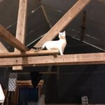 cooper-abas-nieuwe-thuis-kattenherplaatsing