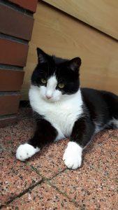 herplaatsing-ot-kat-oisterwijk-kattenherplaatsing