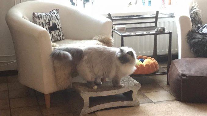 luna-raskattenherplaatsing-rustig-thuis-gezocht