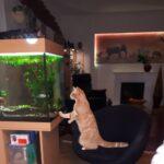 rooije-voorpaginafoto-kattenvoorlichting-kattenherplaatsing