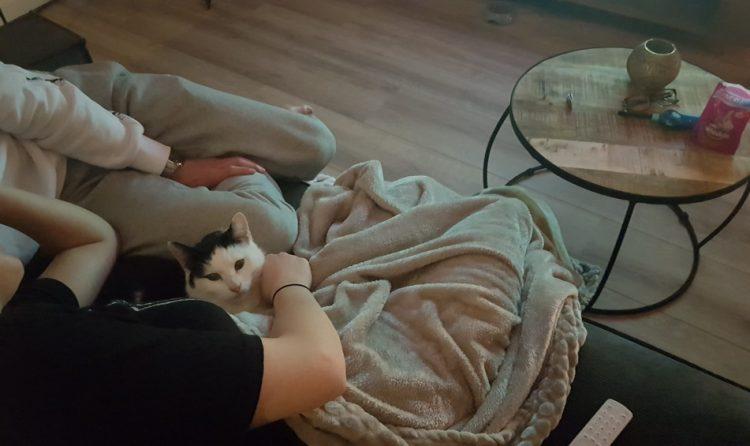 tiger-nieuwe-huis-succesvolle-kattenherplaatsing