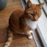 boefie-kater-wijk-bij-duurstede-kattenherplaatsing (2)