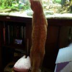 dikkie-dik-vissentv-kattentv-kattenvoorlichting-voorpaginafoto