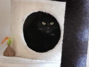 betty-boop-liefdevol-thuis-gezocht-bange-kat