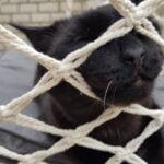 voorpaginafoto-ciao-chantal-kat-kattenvoorlichting
