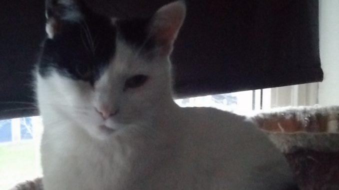 bayley-enschede-adoptiekat-kattenherplaatsing (5)