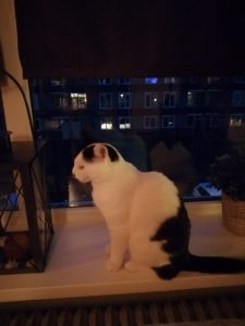 bayley-enschede-adoptiekat-kattenherplaatsing (6)