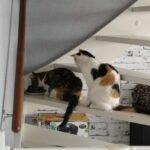 bonny-clyde-poezen-kattenherplaatsing-rotterdam