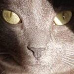 kattenherplaatsing-voorpaginafoto-kat-friemel-dorette-danique-fabienne