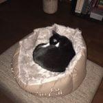 ot-geslaagde-kattenherplaatsing-nieuwe-thuis