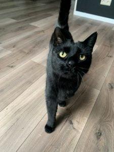 sem-alphen-aan-den-rijn-adoptiekat-kattenherplaatsing-foto