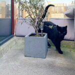 sem-alphen-ad-rijn-kattenherplaatsing