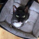 billie-nieuwe-thuis-kattenherplaatsing (2)
