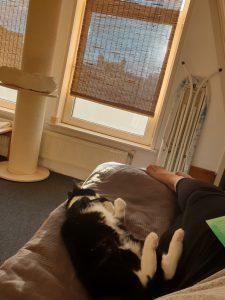 cleo-gouda-herplaatsing-poes-kattenherplaatsing