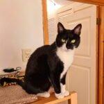 cleo-gouda-herplaatsing-poes-kattenherplaatsing (15)
