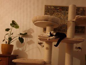 cleo-gouda-herplaatsing-poes-kattenherplaatsing (8)