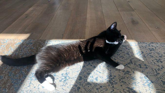 jonge-billie-houten-kattenherplaatsing