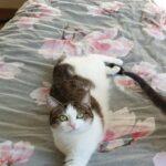 lina-poes-cuijk-kattenherplaatsing-adoptie-kat