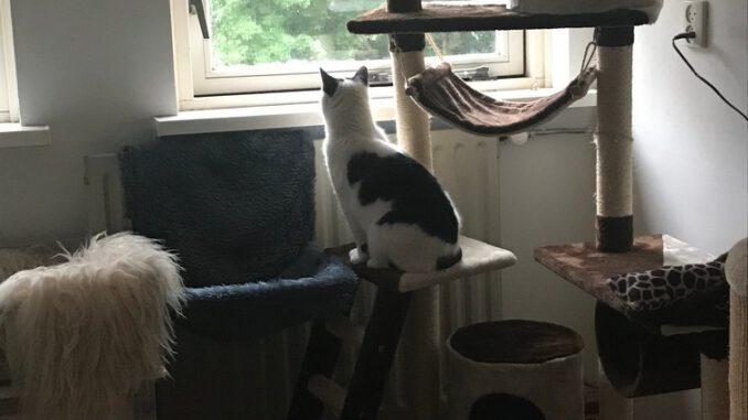 truusje-opvang-cuijk-kattenherplaatsing