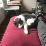 arya-ede-verhuiskat-kattenherplaatsing
