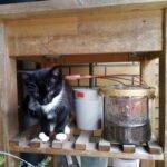 bella-kitten-almere-kattenherplaatsing-kittenherplaatsing