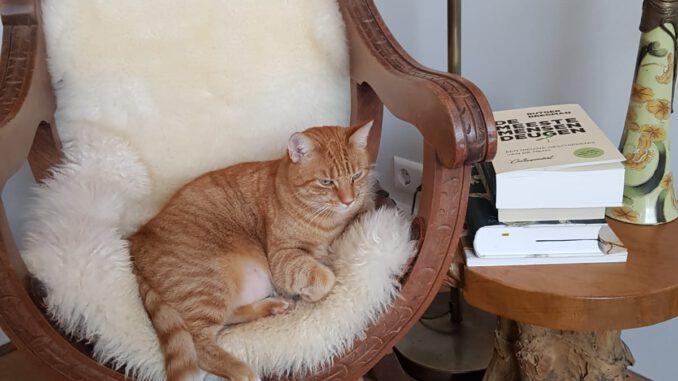 dribbeltje-den-haag-verhuiskat-kattenherplaatsing