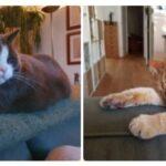 dribbeltje-macho-samen-den-haag-kattenherplaatsing-katten