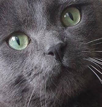 kattenvoorlichting-voorpaginafoto-kat-friemel-dorette-danique-fabienne