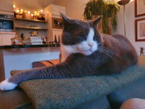 macho-den-haag-kattenherplaatsing