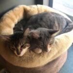 puk-minoes-samen-kattenherplaatsing-utrecht