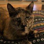 tina-schildpadpoes-arnhem-kattenherplaatsing (2)