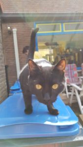 blackie-stichting-knarrekat-kattenherplaatsing-3