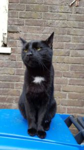 blackie-stichting-knarrekat-kattenherplaatsing-4