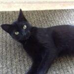 pitertje-kattenherplaatsing-workum (1)