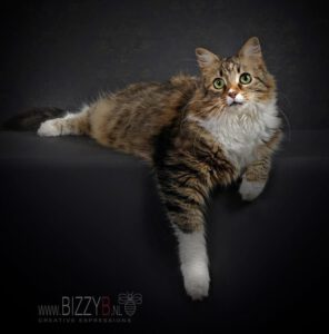 poes-lucky-eemdijk-langharige-kat-kattenherplaatsing