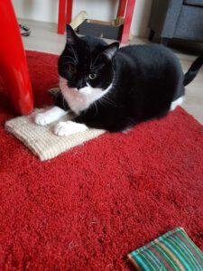 poes-luna-11-jaar-opvang-cuijk-kattenherplaatsing