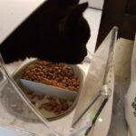 bas-18-jaar-senior-stichting-knarrekat-arnhem-kattenherplaatsing