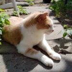 boris-stichting-knarrekat-arnhem-kattenherplaatsing (1)