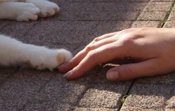 kattenvoorlichting-kattenherplaatsing-kat-anoniem