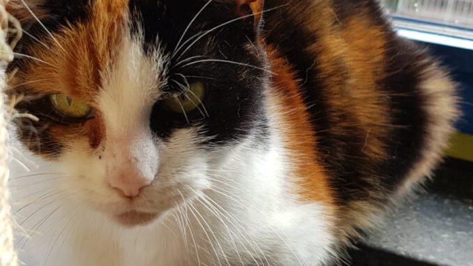 mae-poes-stichting-knarrekat-kattenherplaatsing
