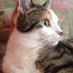 poes-bella-son-kattenherplaatsing
